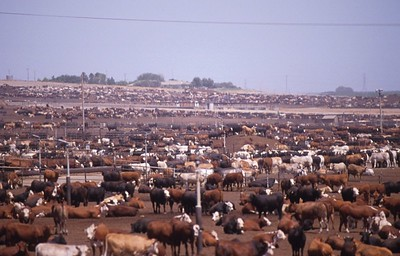 This image has an empty alt attribute; its file name is feedlot-2.jpg